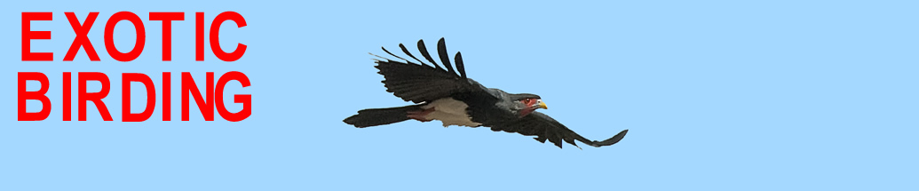 Exotic Birding Tours & Bird Photo Tours - Red-throated Caracara in Guyana