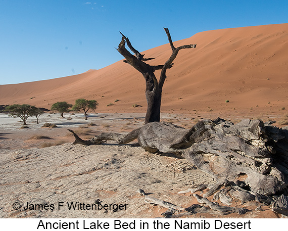 Ancient Lakebed - © The Photographer and Exotic Birding LLC