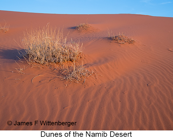 Dunes - © The Photographer and Exotic Birding LLC