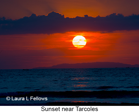 Sunset - © Laura L Fellows and Exotic Birding Tours